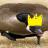 King Bagel